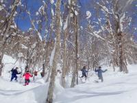 夏に入れない森の奥の草木が生い茂ったフィールドも、雪が深く積もったこの時期ならサクサク進めます!