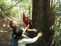 登山道には大きな杉の木がたくさん。抱き付いて木のぬくもりを感じてみれば、心がすっとする感じがします。