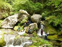 これが東京?!  幽玄で緑深い大自然が迎えてくれます。屋久島にきてしまったかのよう!