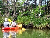 10月~3月にかけては渡り鳥の休憩地になります。野生生物が集まるマングローブ干潟。一見の価値ありです!!