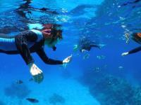 小学生からケラマの海が楽しめるシュノーケリングコースも人気です!