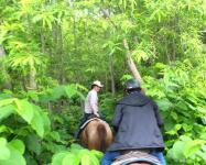 乗馬未経験者もOK!洞爺湖を一望できる、絶景ホーストレッキングです。