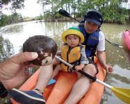 水面ぎりぎりの土の上やマングローブの幹の下をよ〜く観察すると様々な生き物が。