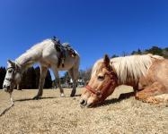 広い放牧地でのんびりと過ごす馬たち。ストレスの少ない環境で馬を育てているので、大人し馬たちばかりです。