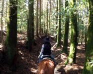 森林を縫うようにしてトレッキングした先には、一直線に並んだ杉林が。