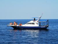 快適さにこだわった自社クルーザーでクルージング!クジラ大好きベテラン船長がご案内します!