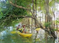 億首川のマングローブの林の中を、自然観察をしながらカヤックでのんびりと進みます。
