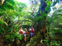 熱帯雨林のジャングルトレッキングも楽しめる