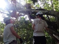 熱帯雨林のジャングルは変わった植物ばかり