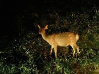 夜の知床、動物や星空を観察しよう!