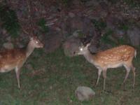 知床で生きる動物の多くは夜行性。懐中電灯を使って、野生動物を探してみましょう。星空を満喫したり、静寂の時間を楽しむこともできますよ。