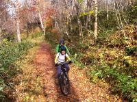 紅葉に染まる「野幌の森」