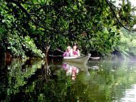 マングローブが生い茂る、原始的な大自然へようこそ!