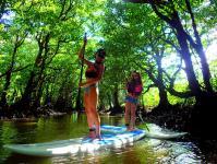 マングローブが生い茂る川の奧へ、探検に出かけよう!