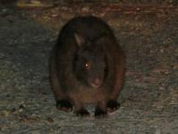 夜の森に入って、珍しい動物と出会おう!