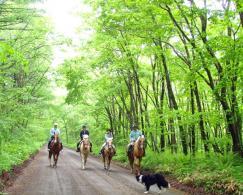 北海道(苫小牧・千歳) ホーストレッキング(乗馬)