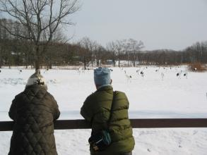冬には数百羽のタンチョウが見られることも