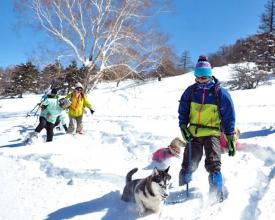 オーナーの皆さん以上に愛犬たちが雪原と戯れたいかも!?