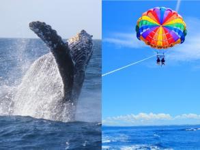 【北部・本部発★4歳からご参加OK!】ホエールウォッチング+美ら海パラセーリング ◆写真付!