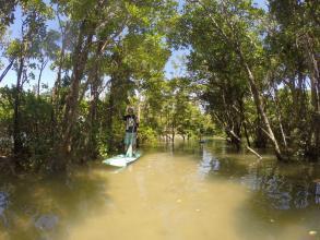 マングローブの林の中をSUPで進もう!