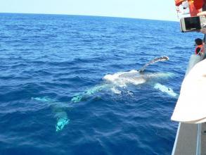 こんなに近くで見れることも!大きなクジラに感動間違いなしです!