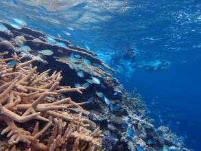 【大サンゴ礁&海亀】ポイントは、ダイナミックな地形やサンゴが圧巻!