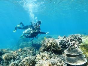 【下地島カヤッファ】300年以上もそこに住む巨大なサンゴ、自然のままに泳ぐお魚たち…エコガイドカフェ自慢のフィールドで、圧巻の海中世界を満喫しましょう!