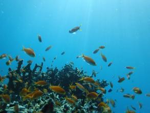 Wリーフでは様々な熱帯魚たちを眺められます!