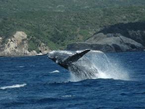 【クジラを愛するすべての人へ】1日ホエールウォッチング