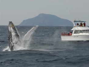 【気軽にクジラに会える!】ホエールウォッチング2時間