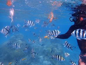 【気軽にケラマブルーの海を楽しもう!】ボートスノーケル2時間ツアー