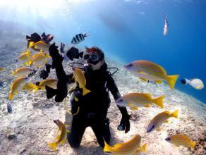 《完全貸し切り制・らくらくボート開催》 美ら海体験ダイビング◆写真つき