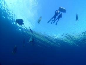 【安心のビーチエントリーで「青の洞窟」へ!ロングコースで気軽に沖縄の海を満喫しよう】◆写真つき