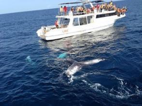 《クジラ遭遇率98%以上!5歳以下は参加費無料。家族みんなでクジラに会いに行こう!》ホエールウォッチングツアー◆写真つき