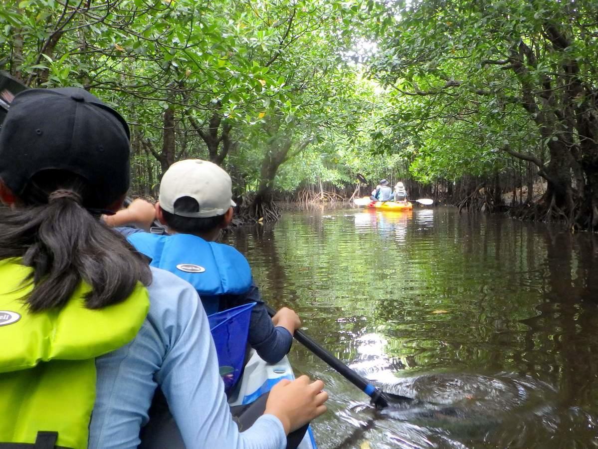西表島 自然観察カヤックツアー