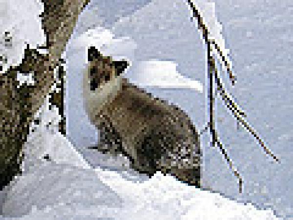 広い雪原の中に動物の足跡と自分たちの足跡を残して気ままにハイキング!