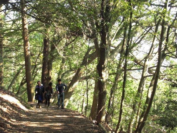 愛宕山の登山道は、とっても広くて歩きやすいですよ。初心者の方も安心です。