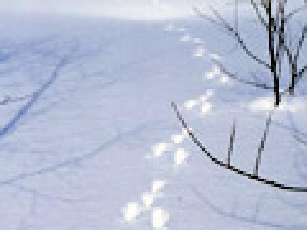 雪の上には動物たちの足跡が。エゾリス、キタキツネ、オゴジョetc。《ネイチャーハイキング》