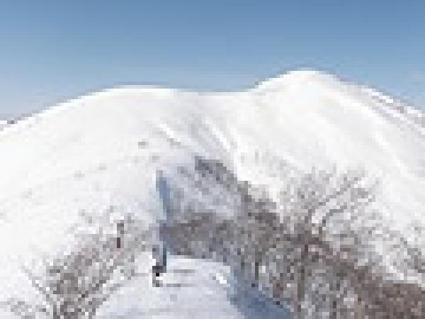 大日ヶ岳頂上からのコース選びは様々。大斜面滑走・ツリーランなどコンディションに合わせて楽しめる♪