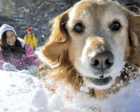 無料の写真撮影が人気です!愛犬と一緒に、真っ白な雪原を駆けよう!