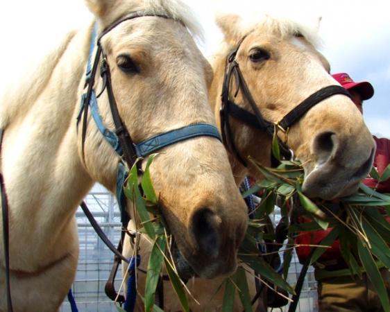 初心者でも安心して乗れる経験豊富な馬達がお待ちしています。