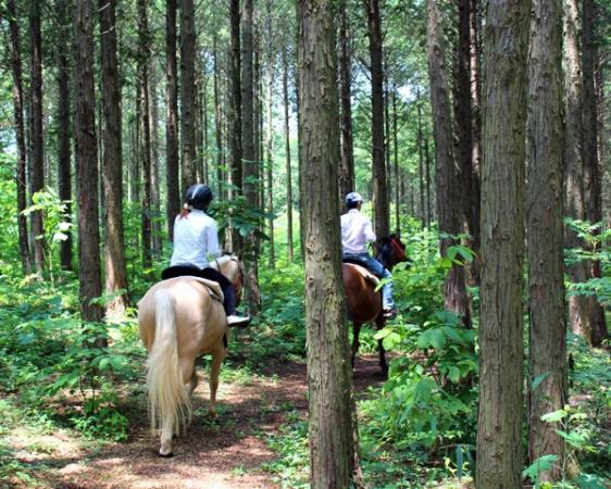 森の中をトレッキングするコースでは、木漏れ日とマイナスイオンを浴びて森林浴を楽しめます!