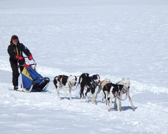 犬ぞりを1人で操縦する、本格的なプランもあり!積載重量が軽いので、2人乗りよりもスピードが出ます。