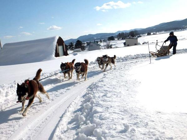 北海道・旭川近郊 犬ぞり