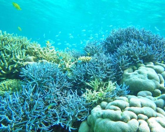 石垣の美しい珊瑚や熱帯魚を楽しめる、シュノーケリングとのセットコースが人気です!