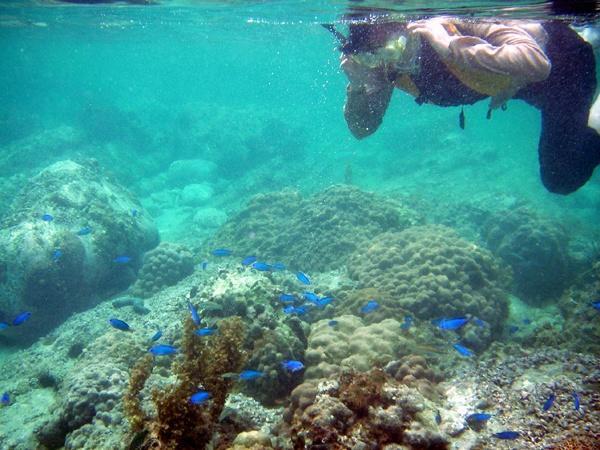 牛深コース: 南国の透明な海をカヤックで漕ぎ渡り、無人島ではシュノーケリングを満喫!