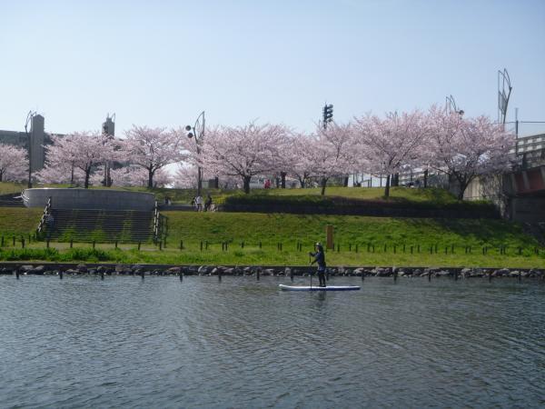 河川敷からは、のどかな自然や東京の街を眺めることができます。水上から眺める桜並木は見ものです!