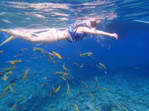 透きとおる美しい海で魚と一緒に泳ごう!
