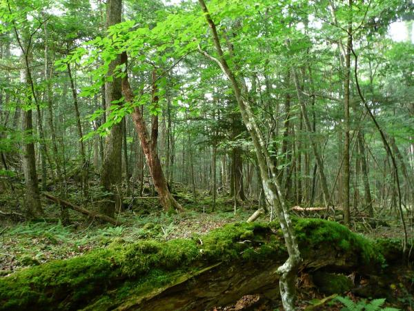 樹海をゆっくりと散策しながら、樹海特有の自然や成り立ちをたっぷり観察しましょう!