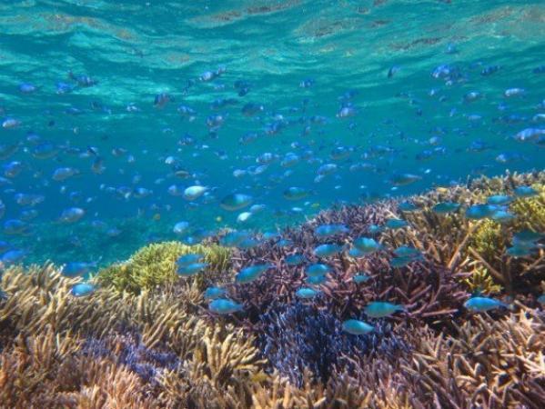 カラフルな熱帯魚も豊富!